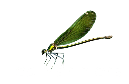 Les Mariniers